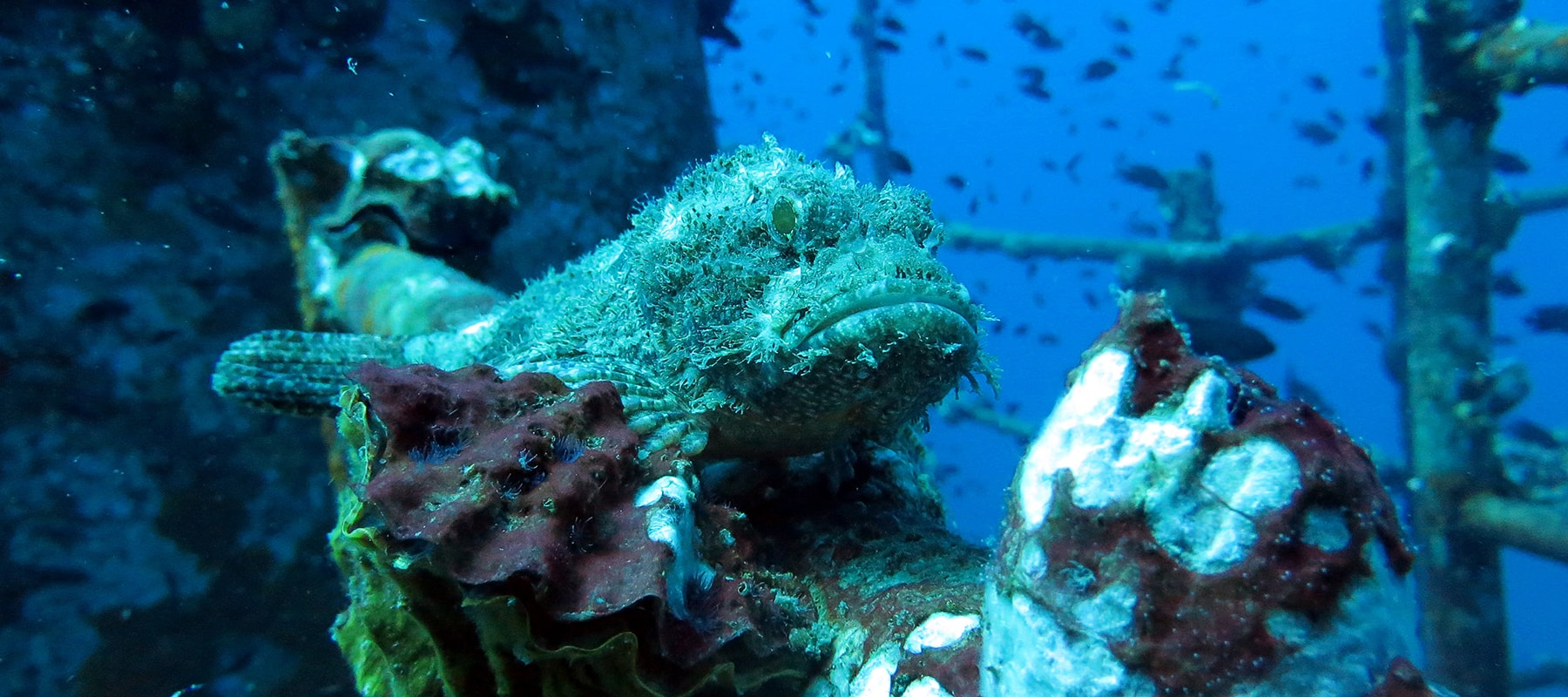 camouflashed-on-wreck